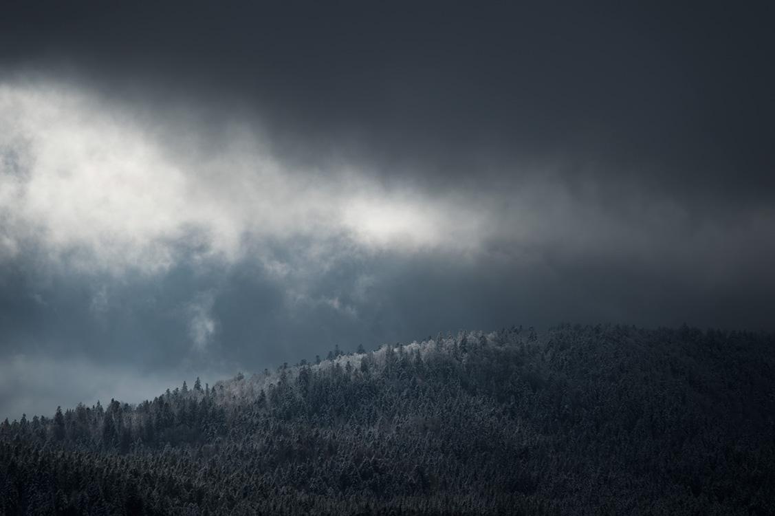 La forêt sombre