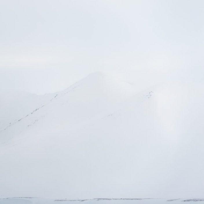 Douceur arctique