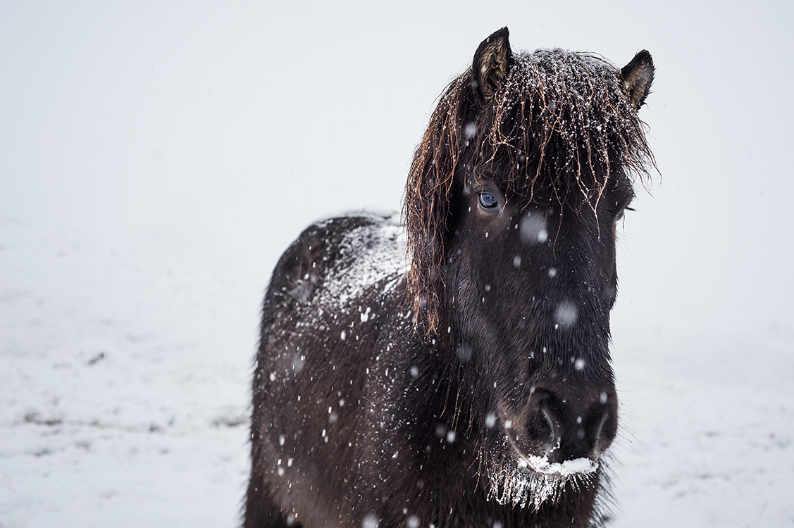Dans l'hiver Islandais