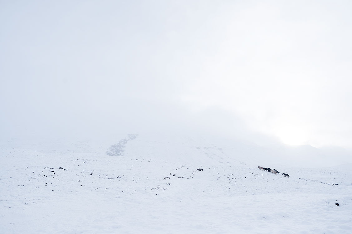 Chevaux des montagnes